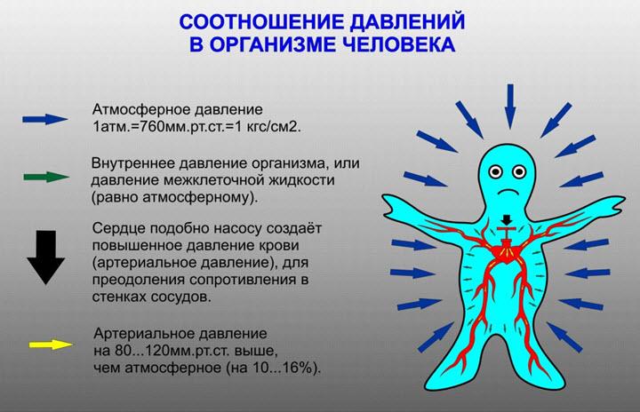 Соотношение давлений в организме человека