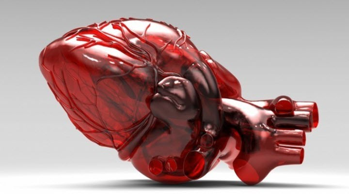 Сердце - хрупкий орган