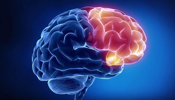Мозг - орган-мишень