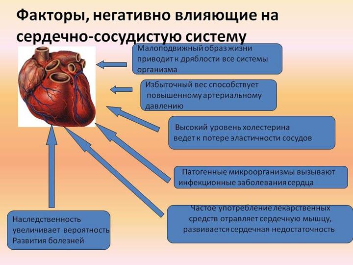 Что негативно влияет на сердце
