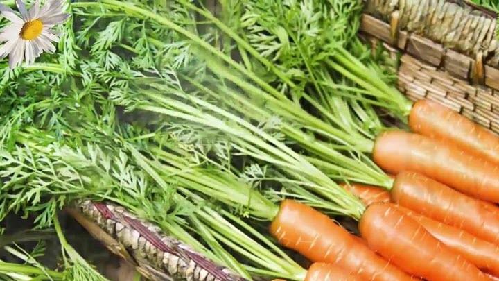 Ботва моркови при варикозе