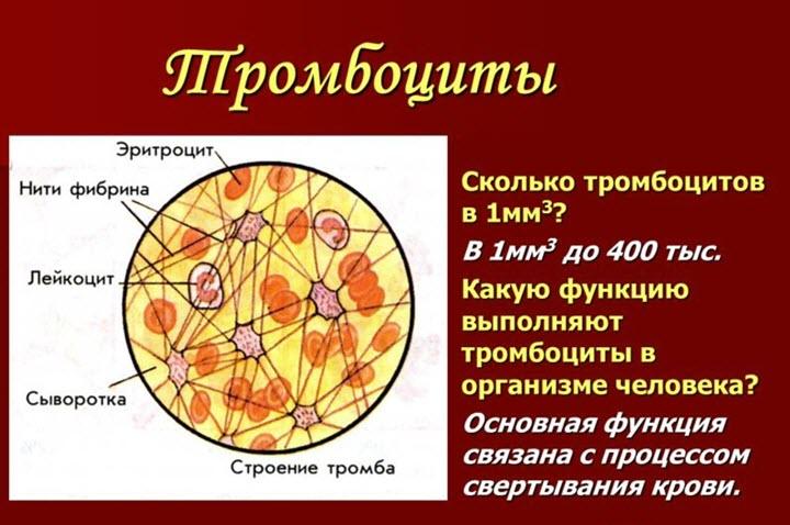 Что такое тромбоциты